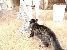 Mon chat Félix et sa doudou