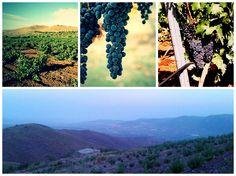 #Weinreise nach #Almeria und Besuch in der Bodega #Alboloduy.