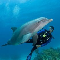 Swimming for Fun: Swimming with Dolphins