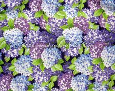 Silk Fabric Digital Printed Hydrangea Floral Silk By