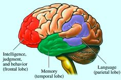 Memorize Things Fast, Quickly, Easily - 10 Best Tips Improving Memory