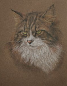 Pet Portrait - Long haired tabby cat coloured pencil drawing on Mi-Teintes paper      +      this is a new blog for analog               art and illustration+      	  	Ask  	Submit  	Angela Dalingerabout      Archive                                		            		        	  	  	    	    	          pet-portrait:    Long haired tabby cat coloured pencil drawing on Mi-Teintes paper.