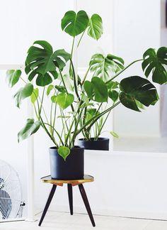 실내에서 키우기편한 음지식물종류-실내 관엽식물키우기, 실내에서 가장 키우기쉬운식물