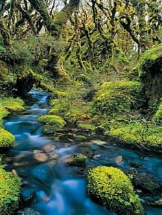 Stewart Island New Zealand Mosses