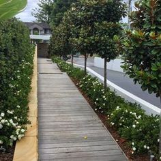 Boardwalk completed for a client in Burraneer - Modern Backyard Trees, Backyard Plan, Small Backyard Gardens, Magnolia Gardens, Magnolia Trees, Shrubs For Landscaping, Hampton Garden, Trees For Front Yard, Front Gardens
