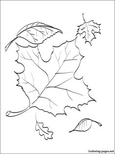 Autumn leaves coloring page | Coloring pages                              …