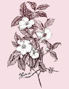 Flowers study by katiebloo on DeviantArt Garden Illustration, Botanical Illustration, Floral Illustrations, Of Wallpaper, Good Day, Don't Forget, Folk, Digital Art, Floral Prints