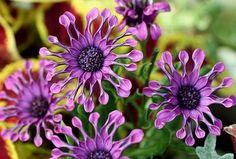 spoon flower janet20