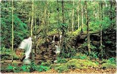 Resultado de imagem para desenho da floresta amazonica