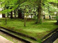 Shade Garden Moss