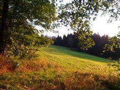 Meadow...