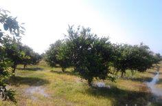 Agricultural Land For Sale In Belek, Turkey. Visit https://www.spotblue.com/turkey-property-for-sale/land-in-belek-bel103/ or email info@spotblue.com for more information.
