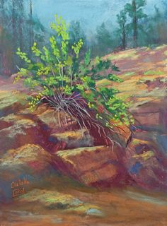 Hanging On Painting, plein air pastel in the mountains of New Mexico. Pastel, 9 x 12 inches,