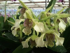 Shade house: Olomana Orchids, O'ahu