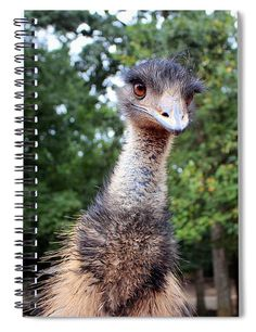 """This x spiral notebook features the artwork """"Curious Emu"""" by Cynthia Guinn on the cover and includes 120 lined pages for your notes and greatest thoughts. Notebooks For Sale, Emu, Lined Page, Fine Art America, Spiral Notebooks, Artist, Artwork, Prints, Notes"""