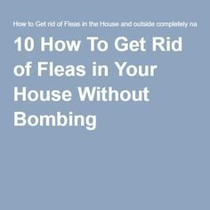 How to kill fleas with household hydrogen peroxide how to get 10 how to get rid of fleas in your house without bombing ccuart Images