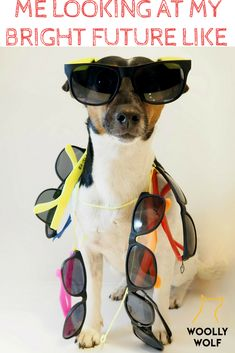 Me looking at my bright future like. Funny dog pictures with captions. Doggy memes, dog with sun glasses. Funny Dog Captions, Funny Dog Memes, Funny Dog Pictures, Funny Dogs, Jack Russell Dogs, Jack Russell Terrier, Rat Terriers, Training Your Puppy, Picture Captions