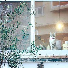 @tora._.gram さんのネコちゃんをご紹介致しております Introducing a lovely cats🐈!Please 'Like' for this picture if you think its cute! #猫#ネコ#猫好き#ネコモ#読モ猫#モデル#ニャンスタグラマー#ニャンとも#猫愛#愛猫#読者モデル#猫グッズ#ちゅらねこ#gatosdeinstagram#instagato#catloversclub#cat_of_instagram#catsofworld#catstocker#고양이를사랑#귀여운고양이#cutecat#gato#고양이#kawaii#kater