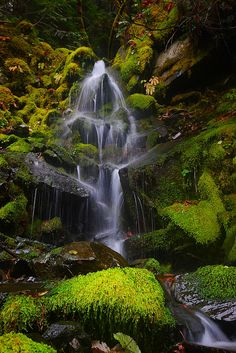Moss, rocks and Water.