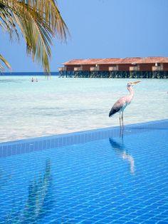 Vilamendhoo Island Resort Spa, Alif Dhaal (Sud Ari) Atoll, Maldives Us Honeymoon Destinations, Northern Mariana Islands, Marshall Islands, Holiday Places, Cook Islands, French Polynesia, Island Resort, Island Beach, Resort Spa