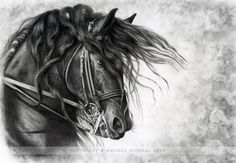 Django of Cacharel - Friesian Stallion by andreamichael.deviantart.com on @deviantART