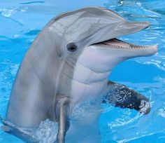 Scientists in a new study repeatedly found dolphins can remember the distinctive whistle —which acts as a name to the marine mammal — of another dolphin they haven't seen in two decades.