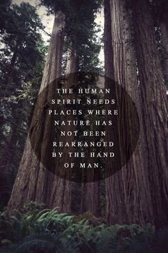 yes.  and i believe everyone should live next to something enormous and extensive made by nature.   mountains, forests, oceans.  remember you are small and nature always wins.