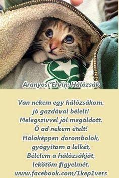 Aranyosi Ervin Hálózsák Verses, Poems, Best Friends, Funny Pictures, Life Quotes, Wisdom, Animals, Quotes, Beat Friends