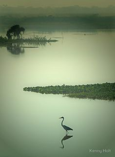 Heron (Garza), Trinidad in the Beni Region of Bolivia
