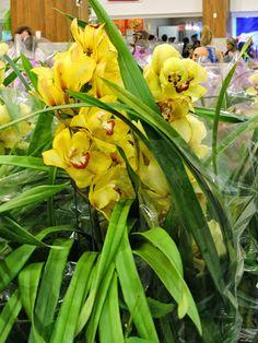expo flores de holambra em salvador