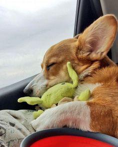 Snugglin'