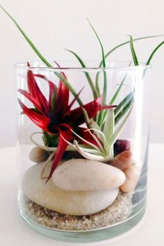 The Easiest Way To Add Life To Your Small Space If you're using air plants, you can skip the soil and opt for decorative rocks and sand instead - from The Sill's top terrarium tips via Air Plant Terrarium, Garden Terrarium, Planting Succulents, Garden Plants, Planting Flowers, Moss Garden, Succulent Planters, Hanging Planters, Glass Terrarium Ideas