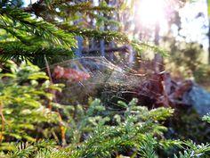 Skogsliv | Flickr - Photo Sharing!