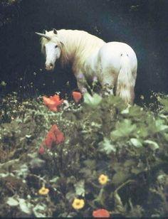Unicorn wandering