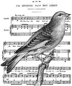 Amo imagens com pássaros
