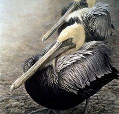 Brown Pelicans by Robert Bateman
