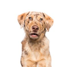 Dogsonality - flabbergasted Finlay by Elke Vogelsang / Skeptical Dogs, Step On A Lego, Vet Clinics, Z Photo, Special Characters, Dog Photography, Bored Panda, New Image, Hanging Out