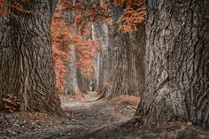 once again by Rudolf Rinner on 500px