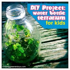DIY Project: Hanging or desktop water bottle terrarium   Chasing ...