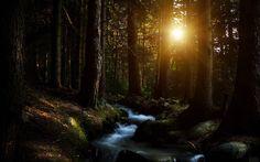 ruisseau des forêts.