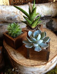 Succulent in a tiny wooden box planter for Home Decor or Wedding Favor. (Stained) Sold individually and can be made to order. $8.00, via Etsy.
