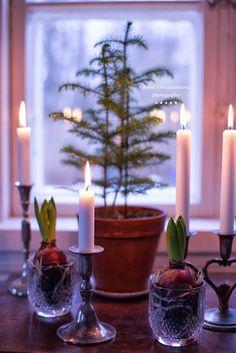 Hyacinth bulbs and candles