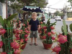 So this is how Dragon Fruit grow!