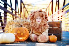 Halloween Baby Photo Shoot | ... months by A Brilliant Photo cuddly cowardly lion costume with pumpkins