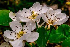 Macro of white flowers
