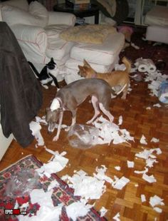 Animal Fail « EPIC FAIL .COM : #1 Source for Epic Fail and Fail Pictures, Fail Videos, and Fail Stories