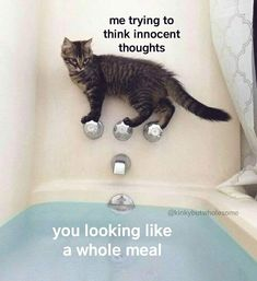 for reals though. just catching your gaze in a reflection. Freaky Memes, Funny Memes, Hilarious, Jokes, Cute Love Memes, When Im Bored, Relationship Memes, Relationships, Quality Memes