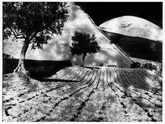 Mario Giacomelli, da Presa di coscienza sulla natura, 1977-2000 - Campagna marchigiana - courtesy Archivio Mario Giacomelli, Senigallia