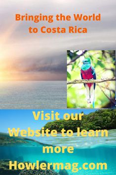Learn about Costa Rica It has so much to offer, Adventure, Wildlife, Beaches, Mountains, Culture and more #CostaRica #puravida #Costaricatravel #costaricatravelblog #costaricatraveltips #costarica2020 #visitcostarica #centralamerica Living In Costa Rica, Travel Blog, Costa Rica Travel, Keeping Healthy, Central America, Beaches, Health And Wellness, Wildlife, Study