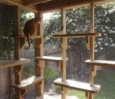 cat_enclosure_09